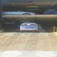 """الباخرة العملاقة """"باساما"""" تفرغ أكثر من 2286 سيارة بميناء المعلا في عدن"""