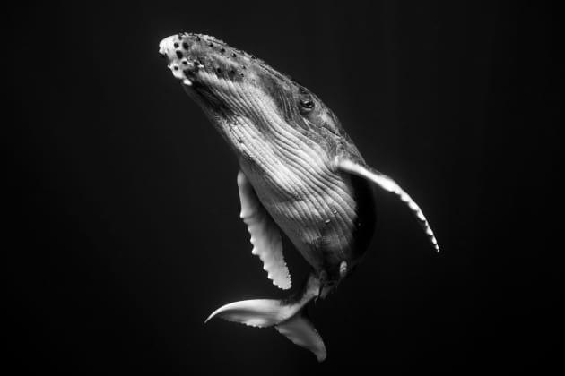 Australian photographer shares stunning photos of whales