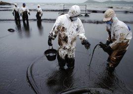 Как очищают от нефти загрязненные моря?