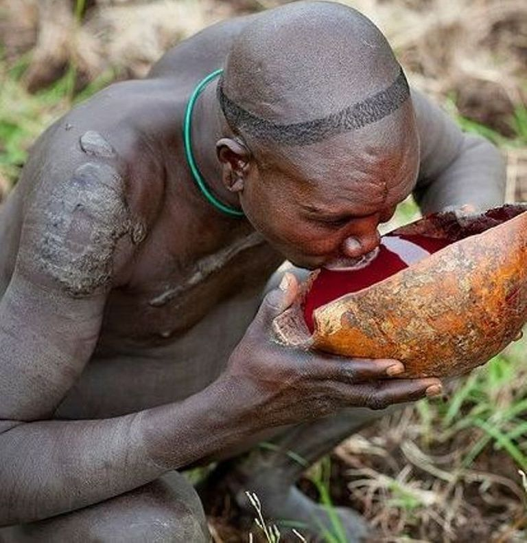 Suri tribal warrior from Omo Valley, Ethiopia drinking cow blood as his morning breakfast