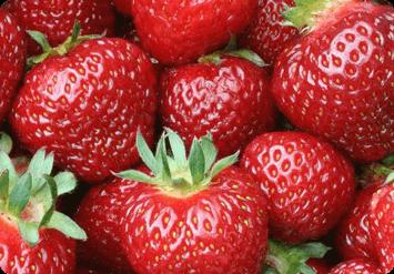 Домашняя ягодница «Домашние грядки»