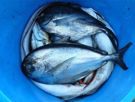 fish-422543
