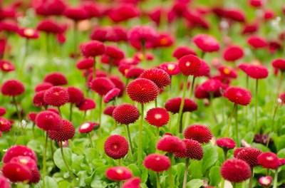 flower-275969_1280