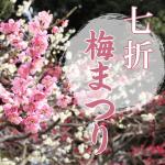 七折の梅まつりに行こう。2019梅園の開花状況と見どころ