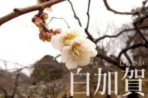 okurayama_ume_009