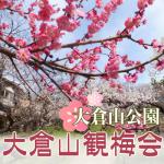 大倉山公園の梅まつり2018。梅林の開花状況と見どころは何?