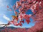 お花見の穴場はどこ?東京都内の隠れ花見スポットはここだ!