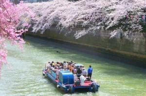 sakura_meguro_river_003