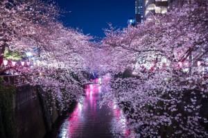 sakura_meguro_river_005