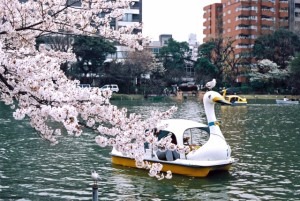 sakura_uenopark_001