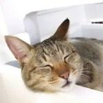 猫の夏の暑さ対策。留守番や一人暮らしの対処法。夏バテの症状とは?