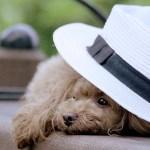 犬の夏の暑さ対策。エアコン温度と留守番の時。夏バテの食欲回復