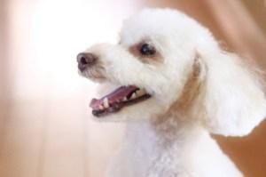 dog_training_006