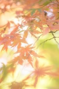 秋分の日はいつ?意味について調べてみました。
