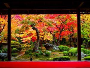 京都の紅葉ライトアップの名所と穴場スポットについてお伝えします。