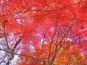 kyoto_autumn_leaves_2015_003