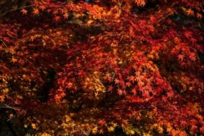 autumn_eikando_2015_003