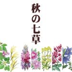 秋の七草の覚え方は?おすすめの方法。種類と意味、由来について