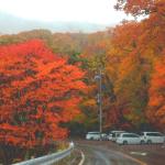 日光の紅葉の見ごろ時期は?ドライブコースと渋滞時間の予測情報