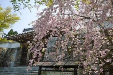 三千院の観光でアクセスと駐車場の情報。あじさいと桜の時期は?