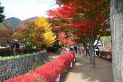 atumun_leaf_kawaguchiko_002