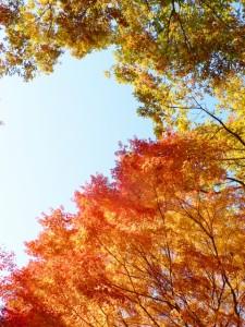 atumun_leaves_shinjyukugyoen_005