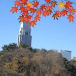 新宿御苑の紅葉2018見頃の時期と秋デートコース。見所と混雑状況