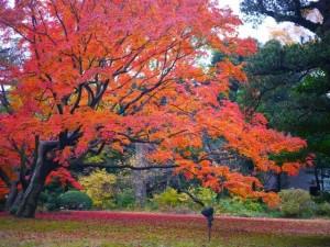 autumn_leaces_rikugien_2015_002