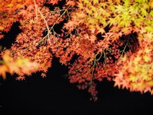 autumn_leaves_yourroukeikoku_2015_005