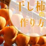 干し柿の作り方。おいしい柔らかい甘柿を簡単に!室内のコツと時期
