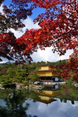 金閣寺の紅葉で見ごろ時期と混雑状況を調べました。