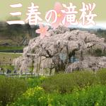 三春の滝桜2018年の見頃と開花状況は?地図住所とアクセス方法