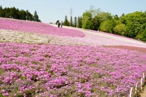 hitsujiyamapark_006