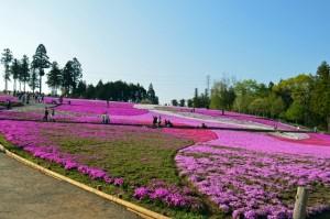 hitsujiyamapark_007