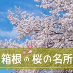 箱根の桜の開花状況2018。見ごろの時期はいつ?花見の名所と予想