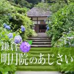 鎌倉明月院のあじさい見頃。2018開花状況。混雑時期とアクセス法