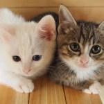 猫が子供を助ける時見せる威嚇行動とは…猫の生態あれこれ