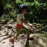 【子供】縄文杉登山は何歳からチャレンジできる?白谷雲水峡とヤクスギランド で歩けるコースもご紹介
