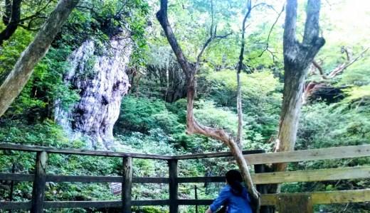 屋久島はじめてにぴったり!【2泊3日】人気のトレッキングモデルコース(観光ガイドツアーなし)