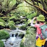 個人手配の仕方【屋久島旅行】メリット・デメリットを旅行会社ツアーとの比較しました。