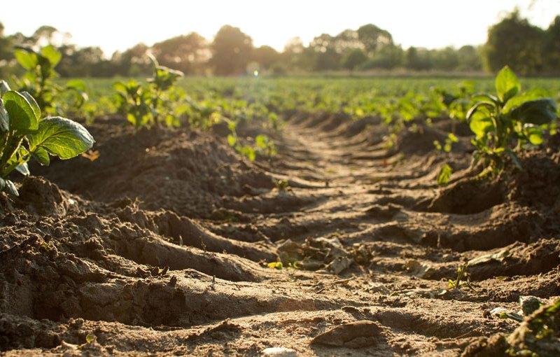 Tractor tracks in soil