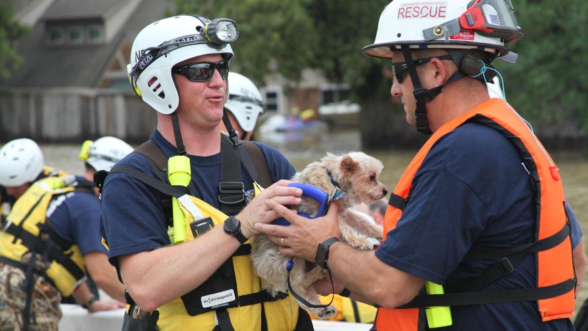 FEMA pet rescue