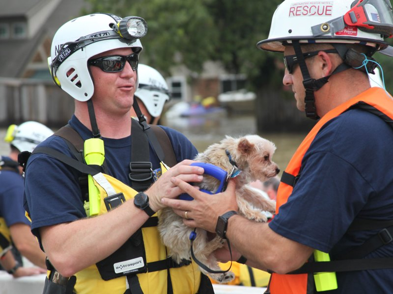 FEMA pet rescue
