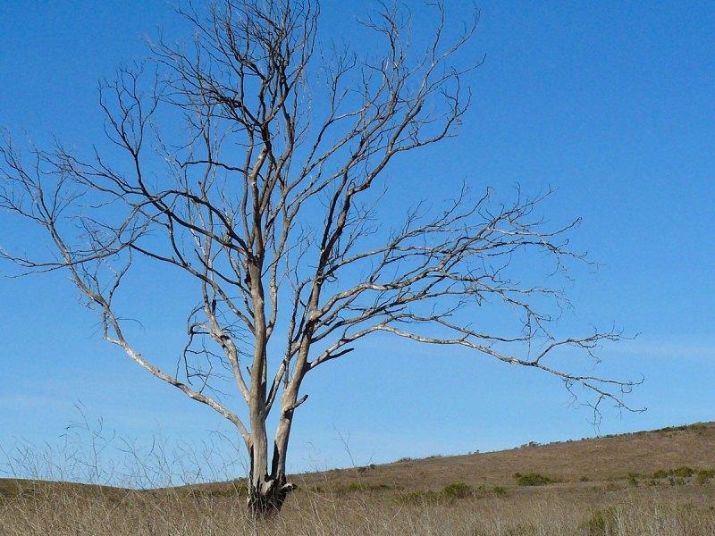 Tree on dry land