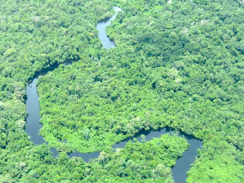 A bird's eye view of the Amazon Rain Forest