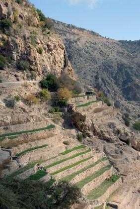 terrace farm, Oman, photo courtesy of Elite Tourism