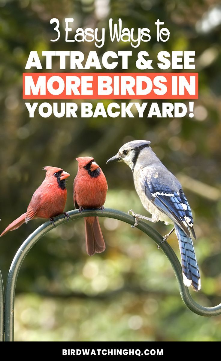 how to attract birds to a birdhouse