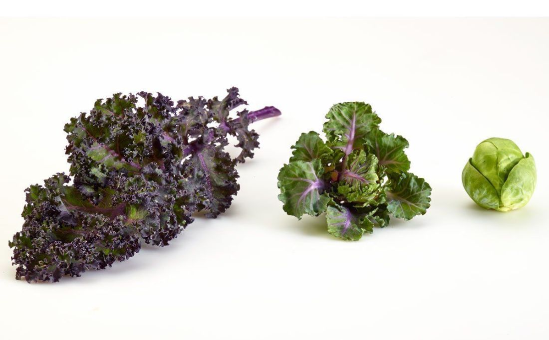 How to grow kalettes new superfood the kale and brussels