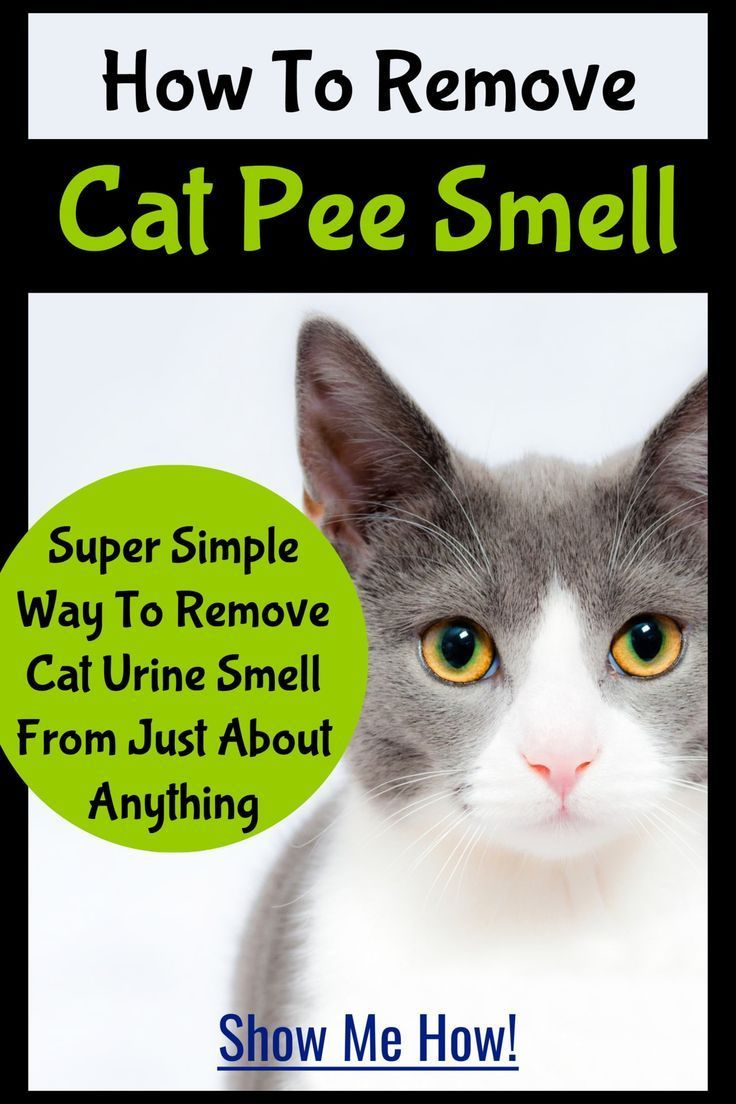 Cat urine stink how to get rid of cat pee smell cat pee