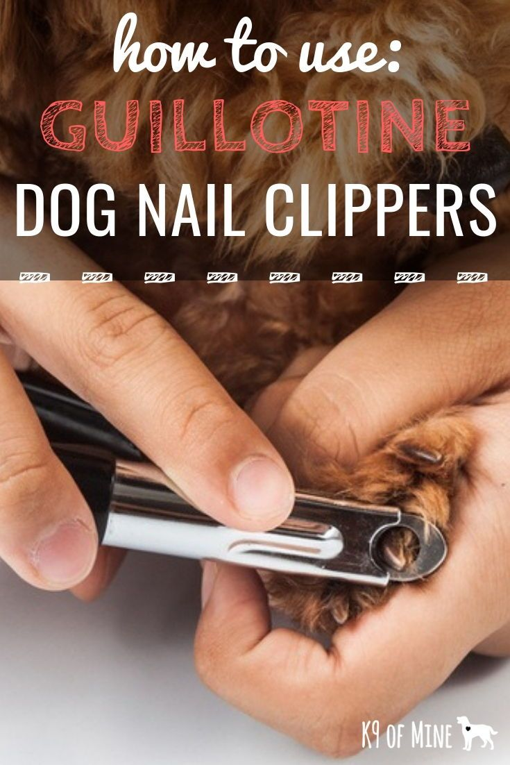 How to use guillotine dog nail clippers dog grooming